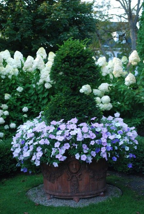 double ball yew topiary, and mixed pastel petunias