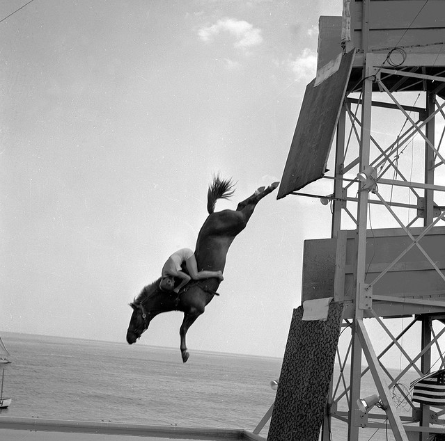 To The Horses Horse diving, Horses, Vintage horse