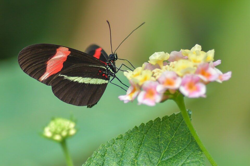 High Quality Butterfly Wallpapers Full Hd 1080p Free Download Butterfly Pictures Butterfly Wallpaper Butterfly Images