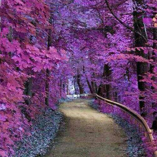 What Amazing Purple Beautiful Nature Nature Photography Beautiful Places
