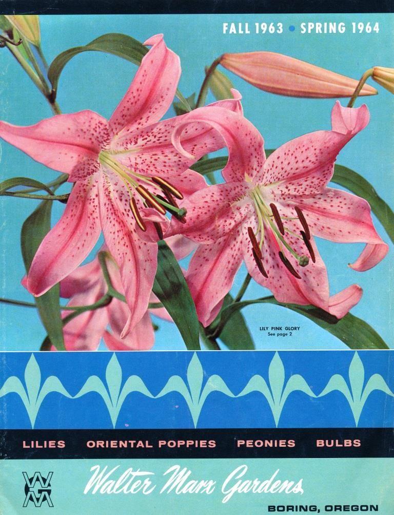 1964 walter marx gardens lilies in 2020 garden catalogs