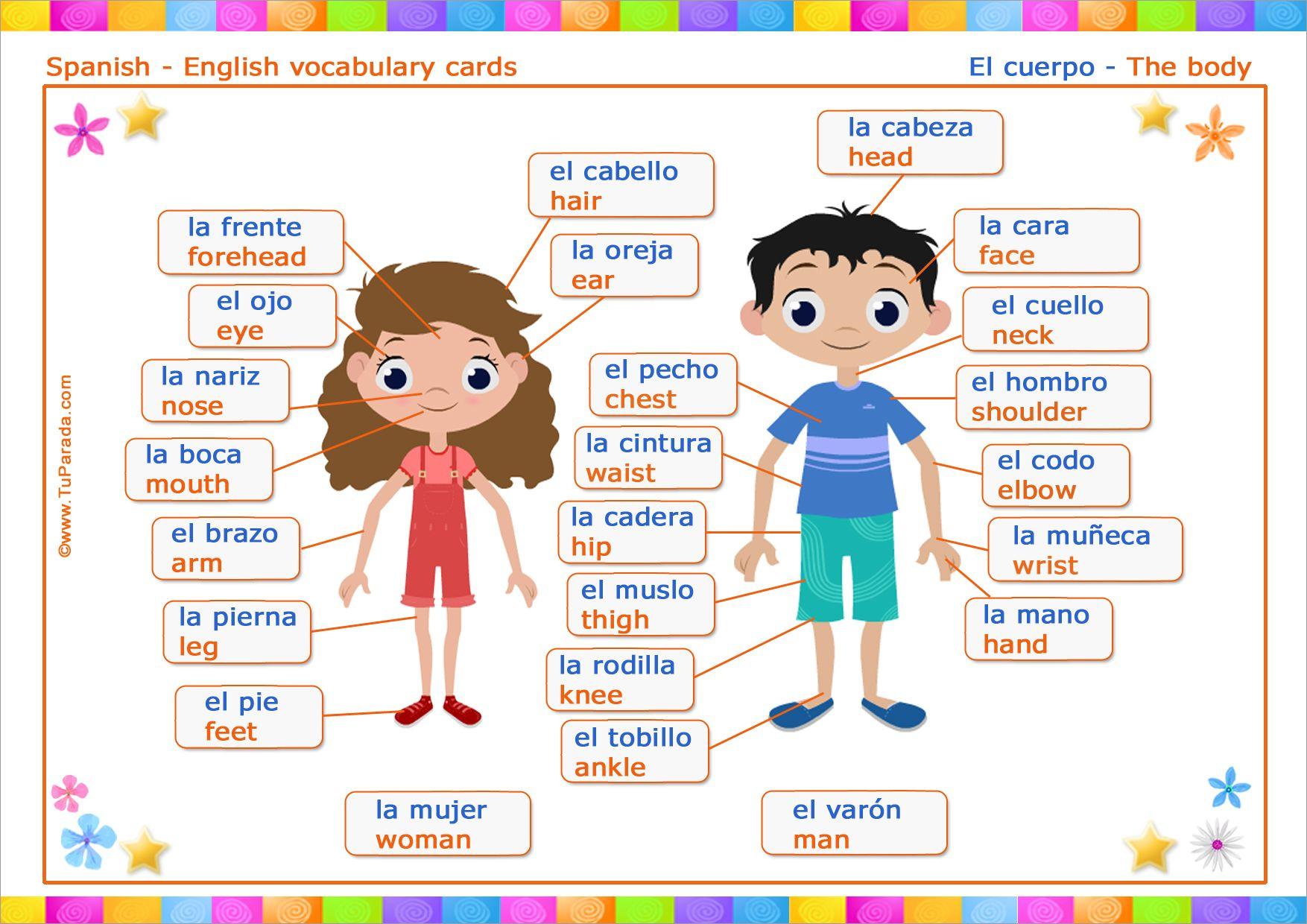 Vocabulario Español Inglés El Cuerpo The Body Vocabulario Español In Partes Del Cuerpo En Ingles Vocabulario Español Tarjetas De Vocabulario En Español