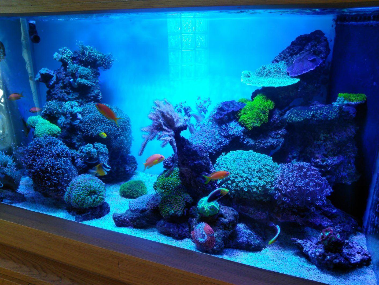 Reef Aquarium Led Lights Led Aquarium Lighting Reef Lighting Reef Tank