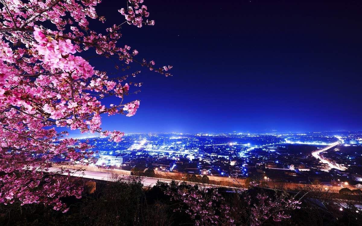 Cerisier du Japon – Ville – Nuit – Wallpaper – Free