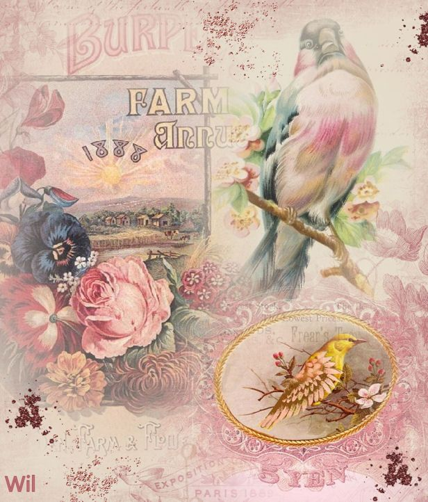 Free vintage bird flowers shabby pink roses collage