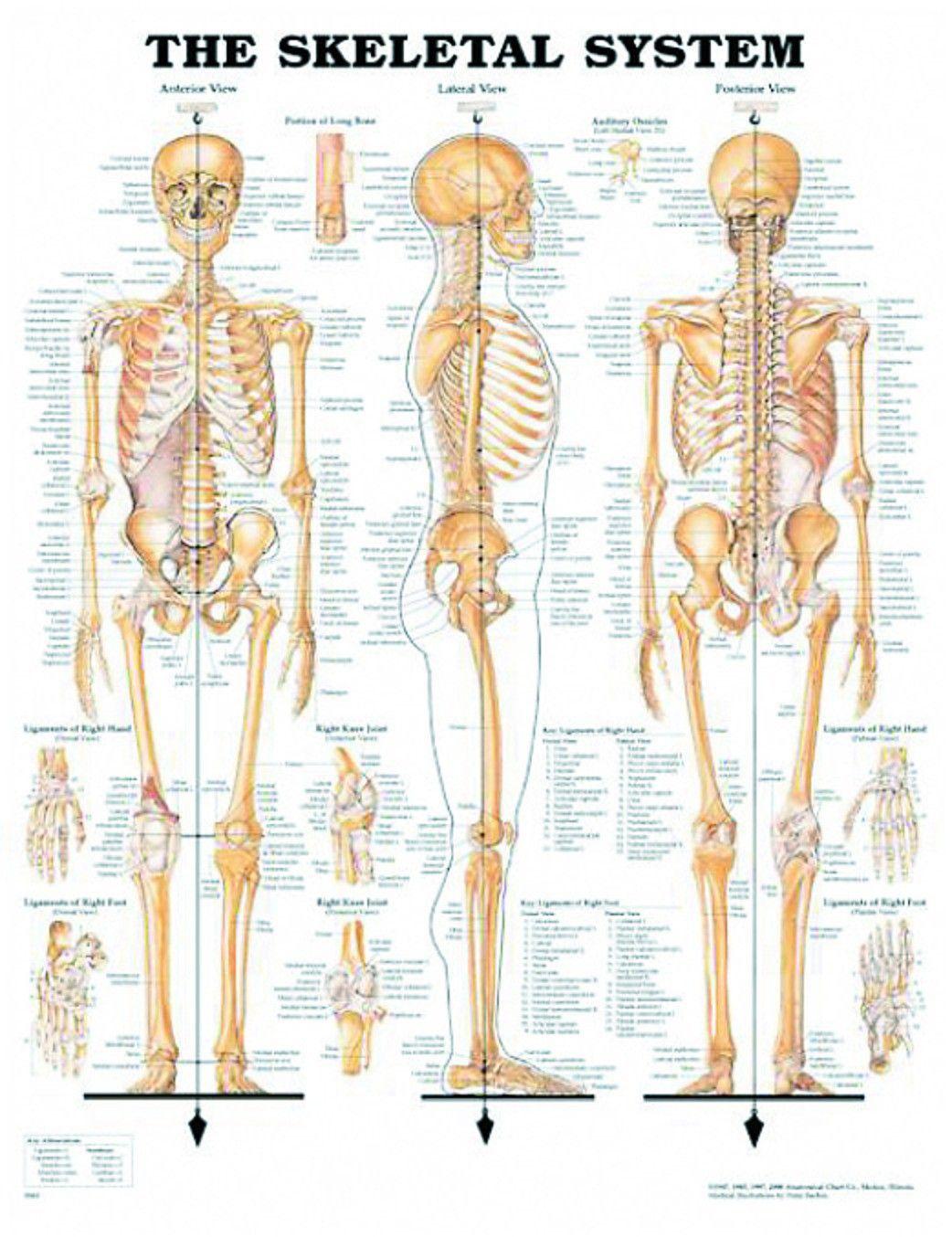 Onwijs Afbeeldingsresultaat voor menselijk vrouwelijk lichaam organen VK-18