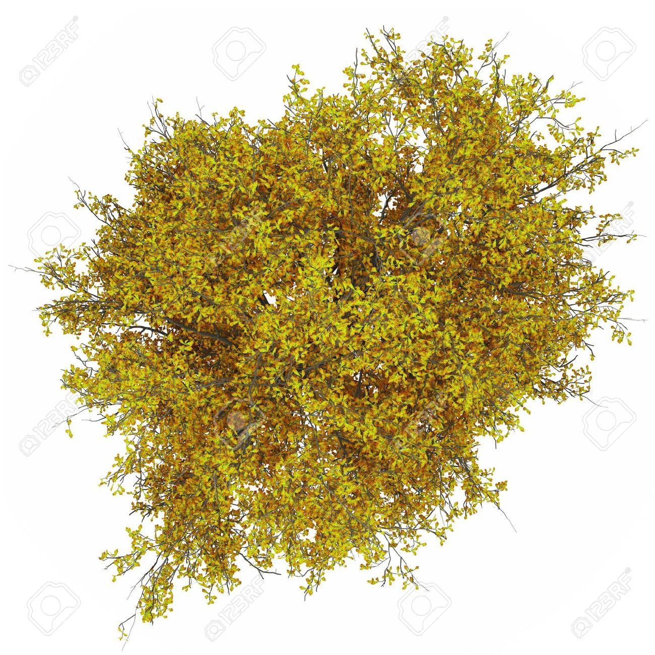 Trees top view google search ref plant cutouts for Pflanzen evergreen