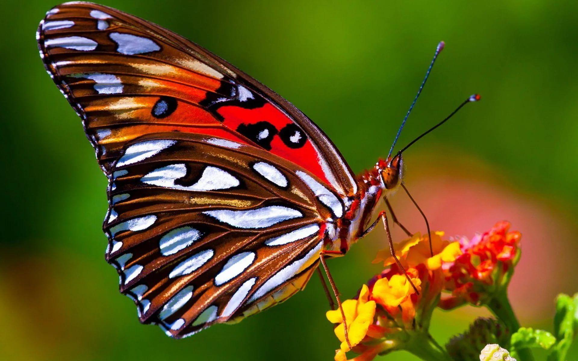 Обои мир бабочек, красота, цветок. Макро foto 14