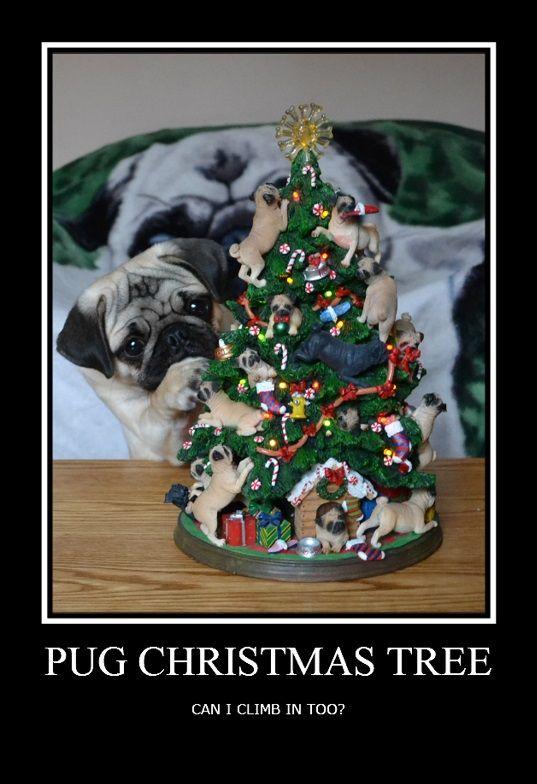Funny Pug Dog Meme Lol Pug And A Christmas Tree Pug Puppy Dog