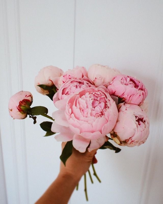 Instagram | milionrazy - #1k* #aesthetic #and #bouquet #coffee #cup #floral #flowers #hand #peonies #pink #post #saucer #woman