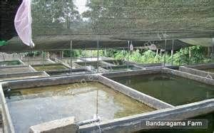 Aquatic fish farm ponds in florida on pinterest 31 pins for Fish farms in florida