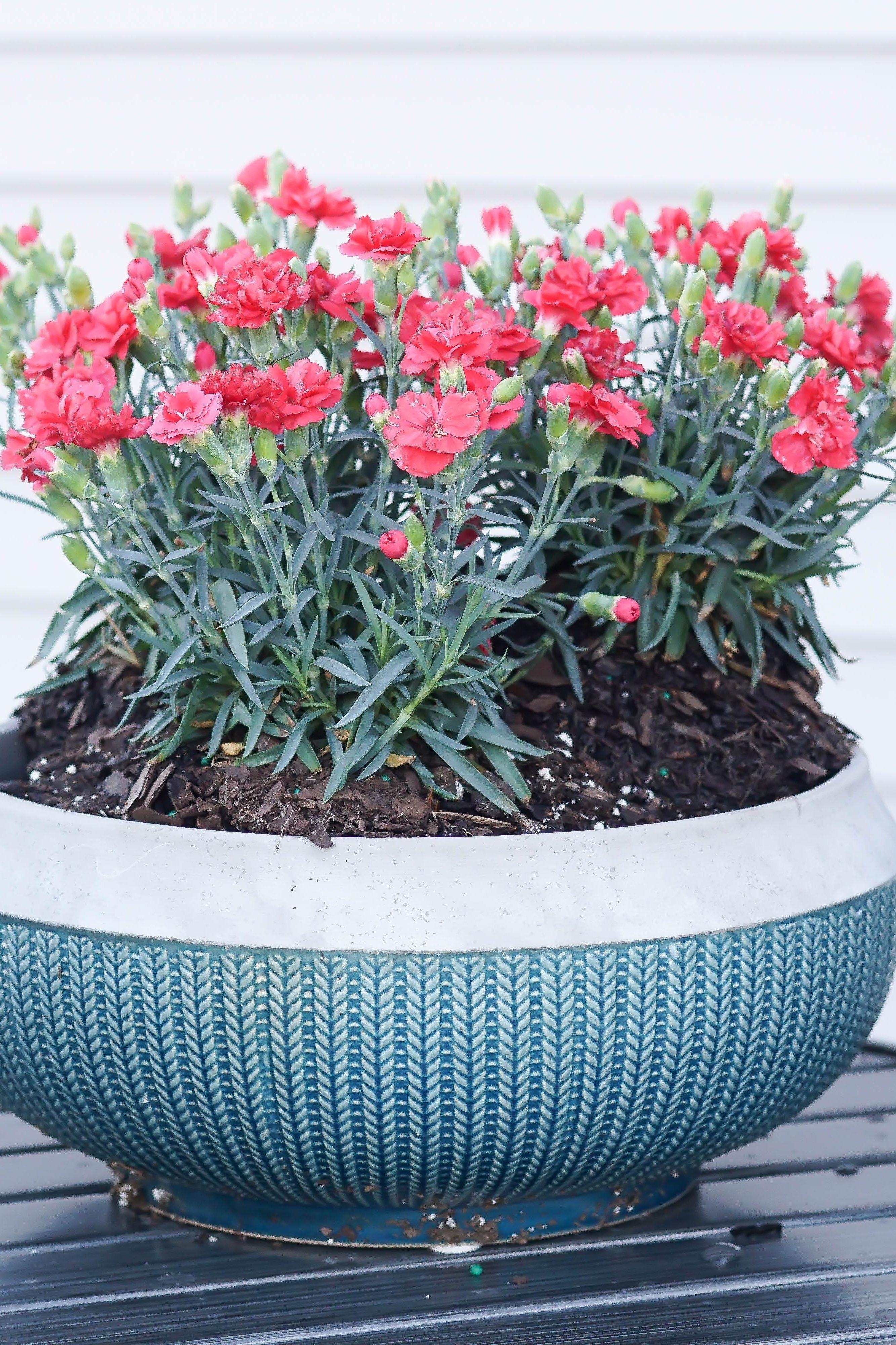 Better Homes Gardens 12 Teal Brookmonte Planter Walmart Com Succulent Garden Indoor Garden Plant Pots Succulents Indoor