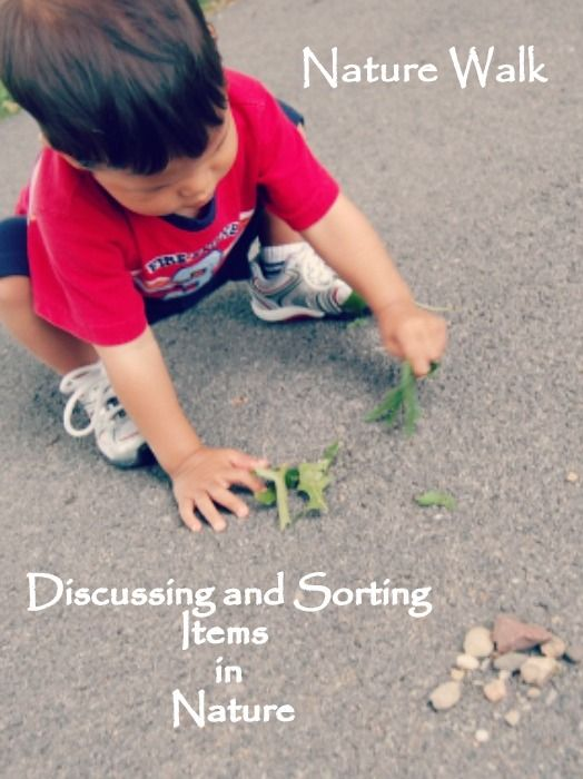 Nature Walk ~ Discussing and Sorting Items in Nature