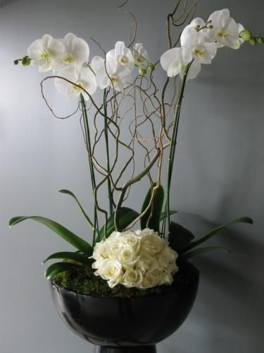 Orquideas blancas rni pinterest for Orquideas artificiales