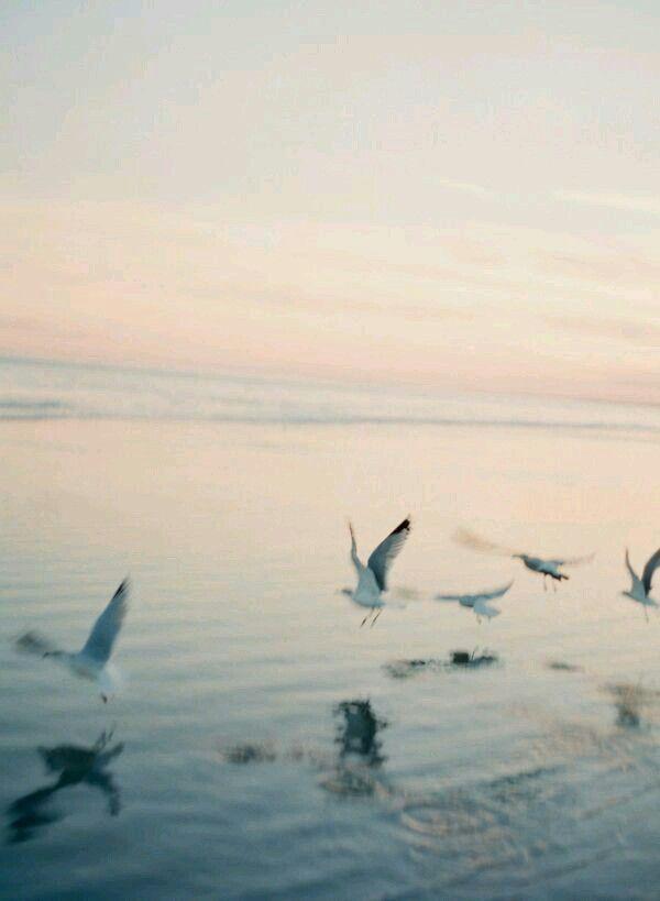 البحر الغروب السماء الطيور سبحان الله جميله Photography Photo Nature