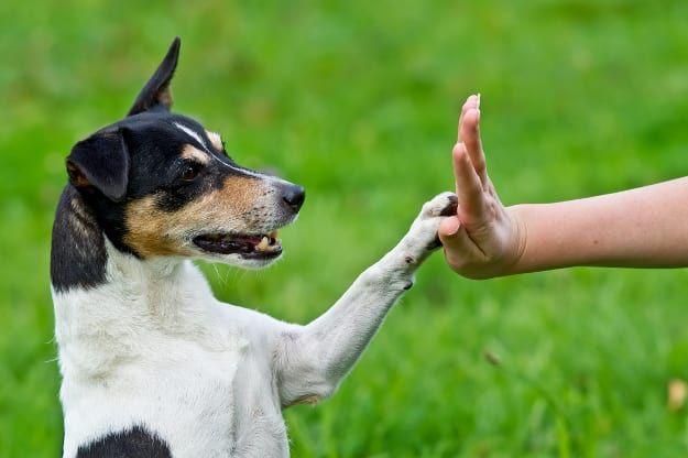 discover the secrets of dog training