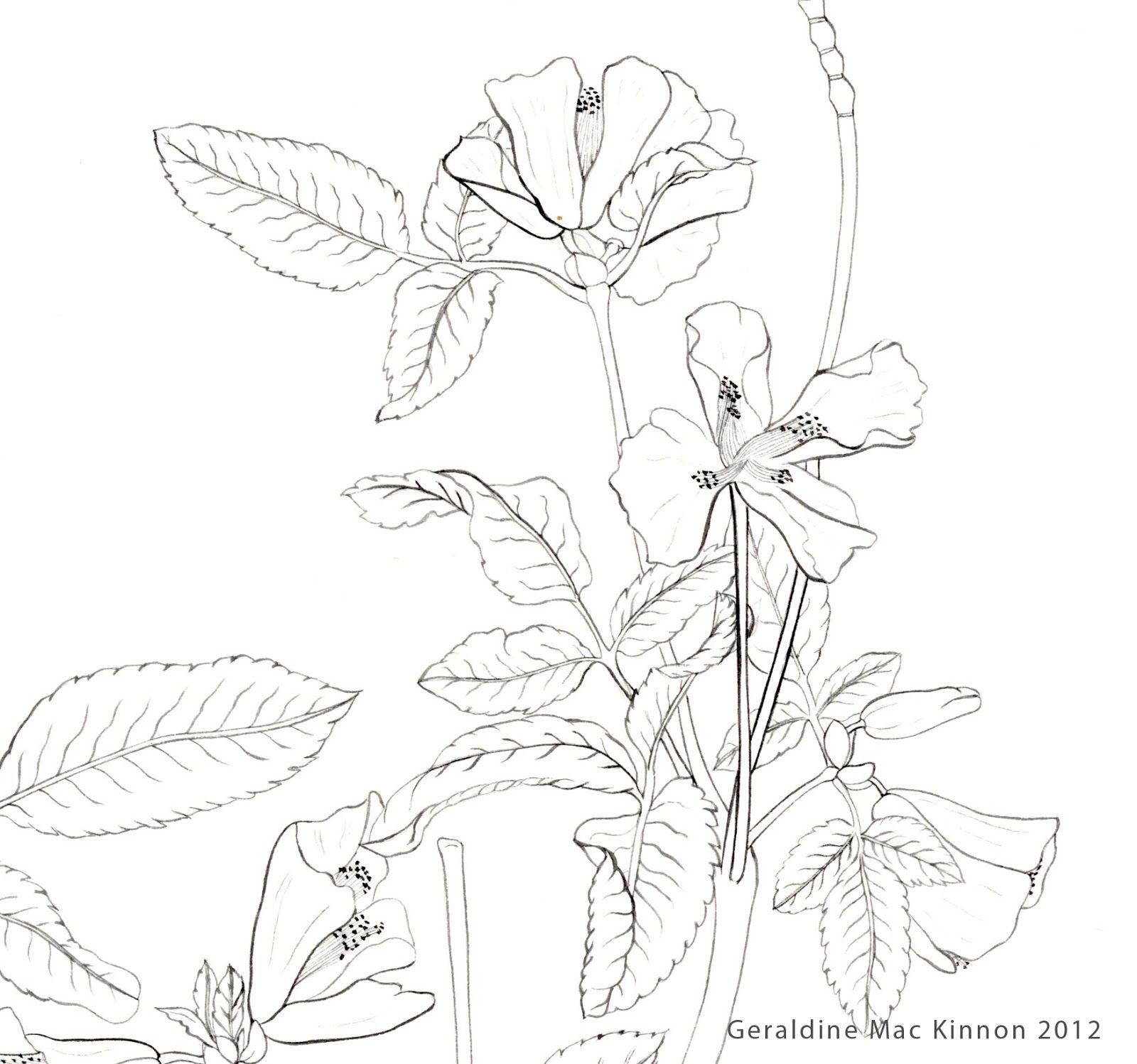 Resultado de imagen para imagenes del naturalismo literario para dibujar