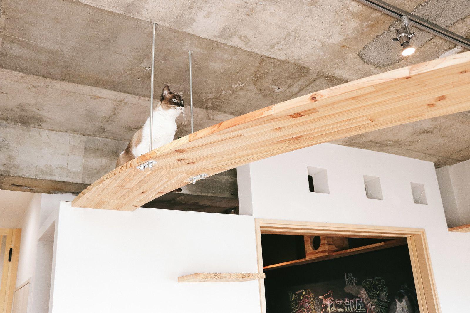 猫への思いやりがつまったキャットウォークがある家猫への思いやりが