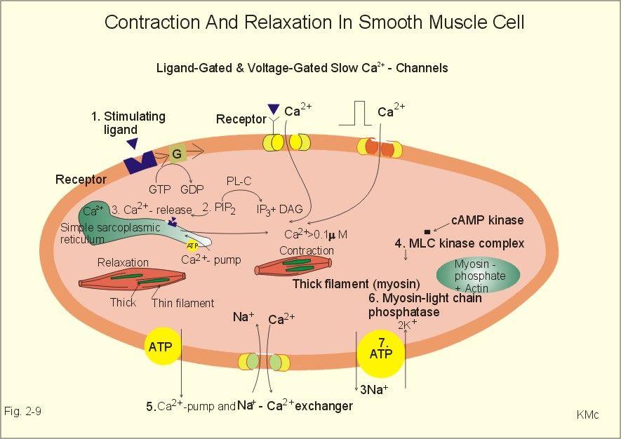 relationship between hormones and power factor