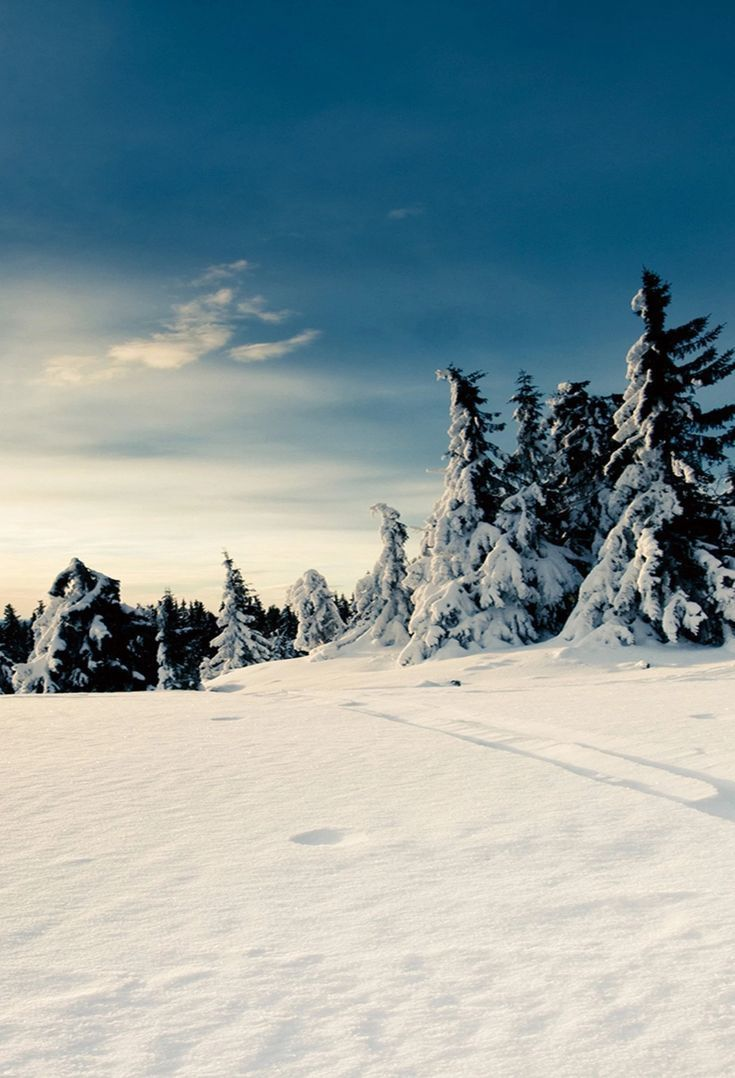 Winter Wonderland in Norway: Landscape Photography by Steffen Fossbakk #fondecrannoel Winter Snowy Cedar Photo Props Backdrop J02724 – Dbackdrop #fondecranhiver