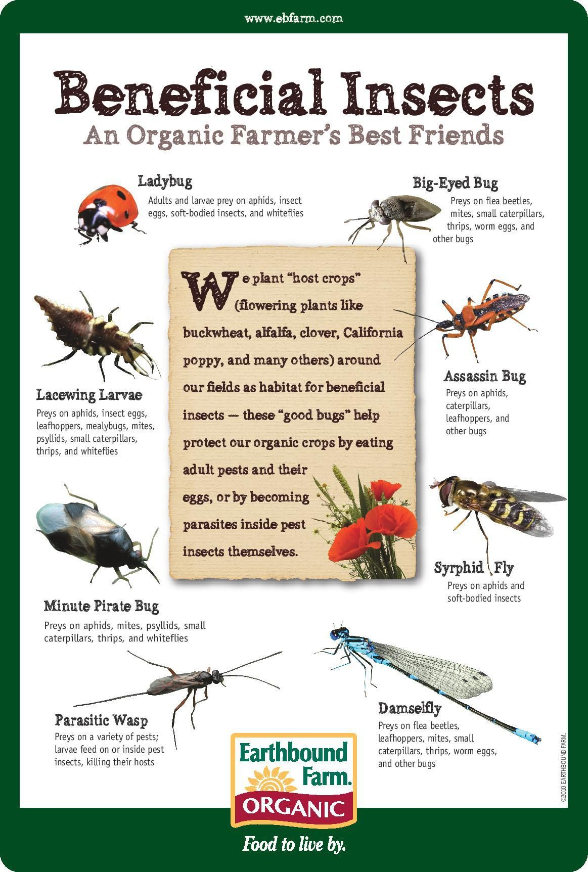 Beneficial Insects An Organic Farmer S Best Friends