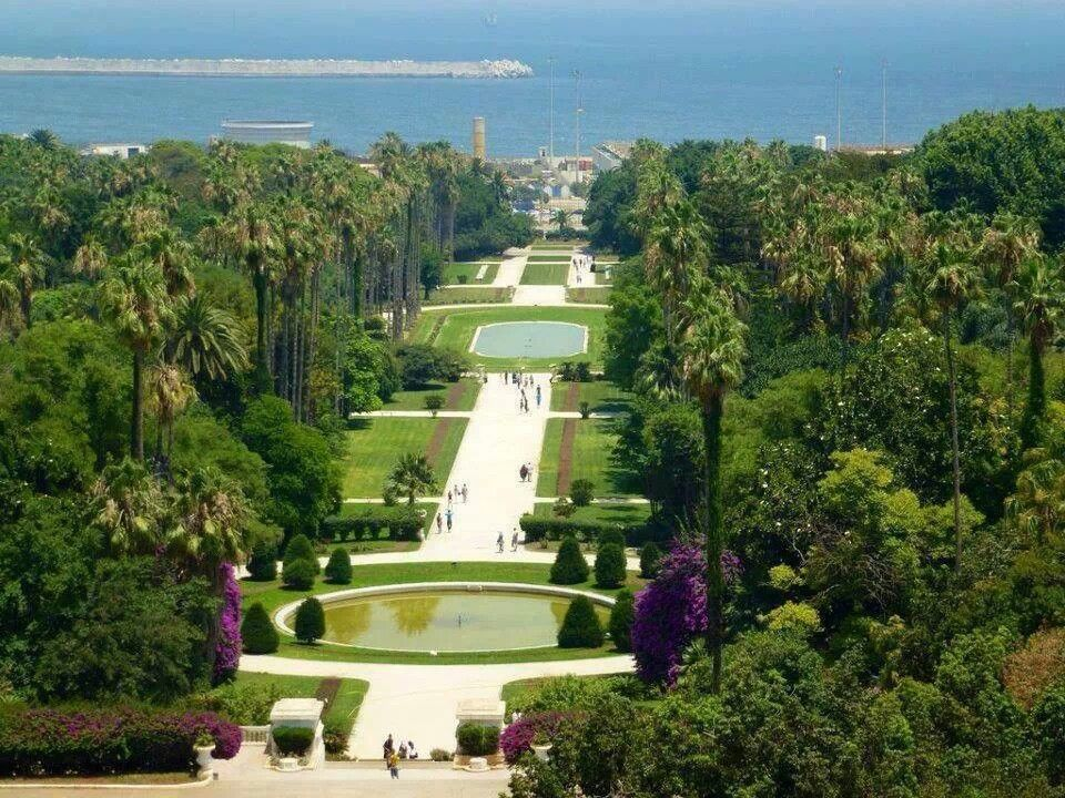 The Jardin D Essai Hama In Alger The Original 1932 Tarzan Movie
