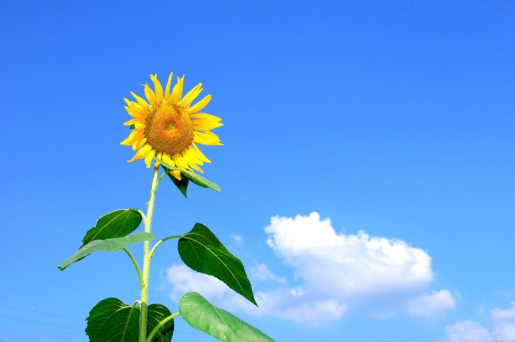 خلفيات الوان بجودة Hd خلفيات ملونة 2019 Tecnologis Earth Day Sunflower Sunflower Images