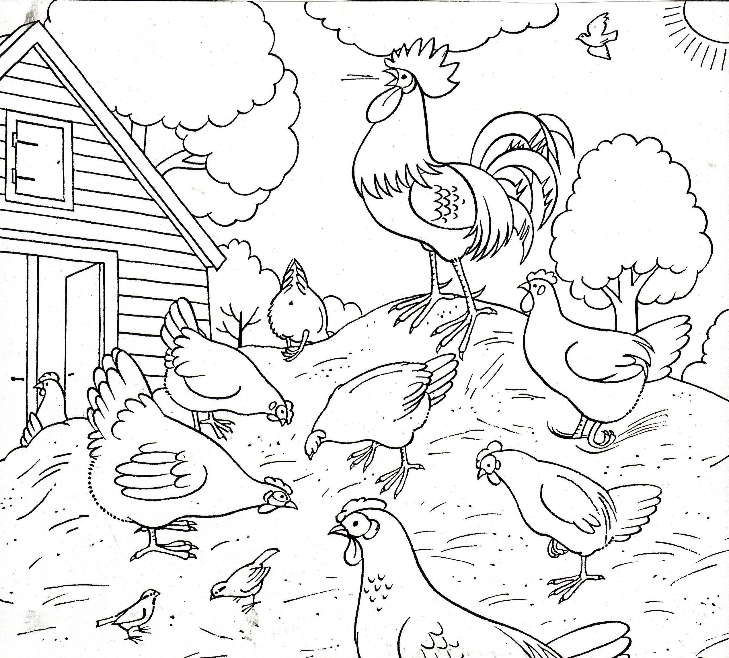 Домашние птицы картинки для детей раскраски