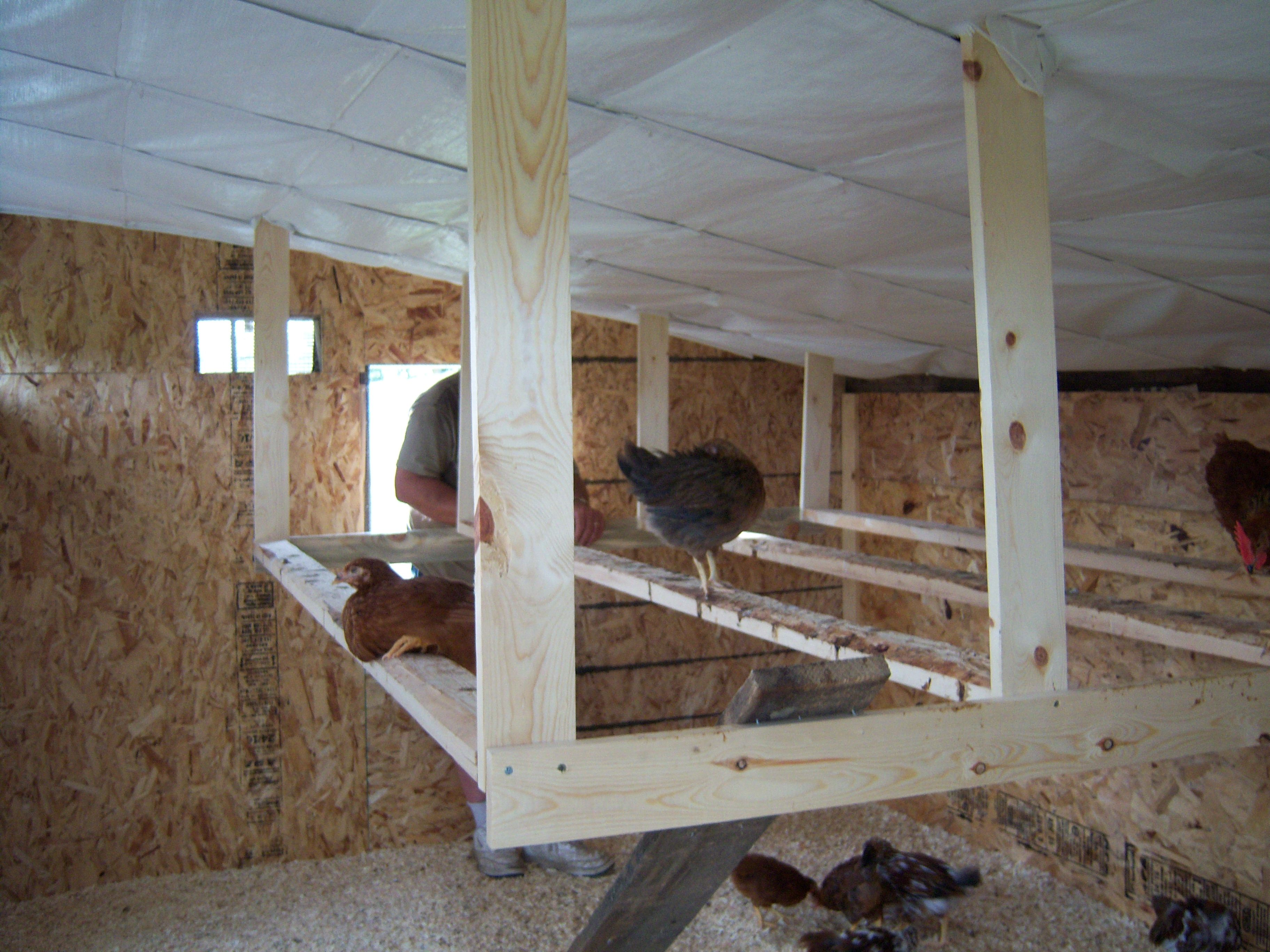 Nest Box And Perch Pics Please Chicken Roost Chicken Diy