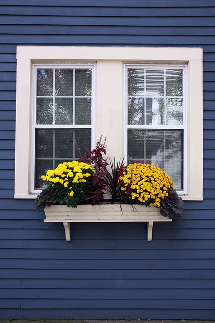 window box House, House colors and Paint ideas
