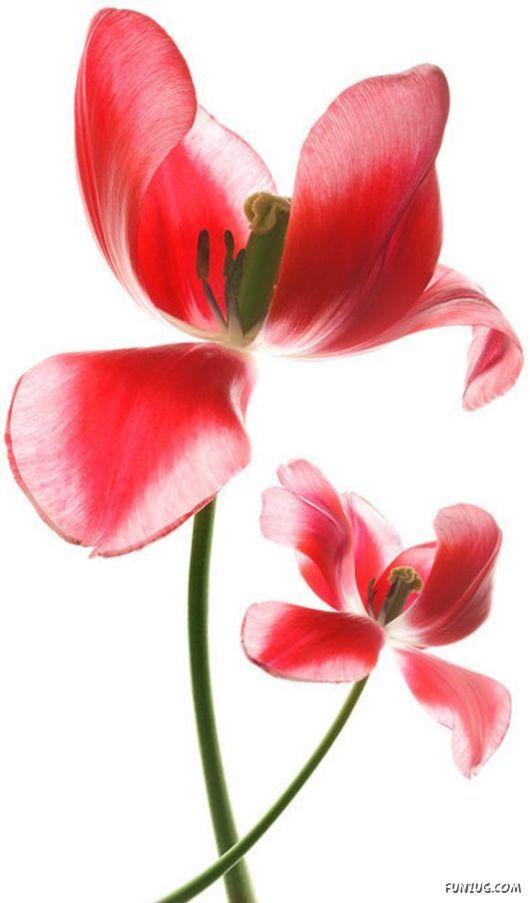 Name:  cute_flowers_art_10.jpg Views: 2509 Size:  42.9 KB
