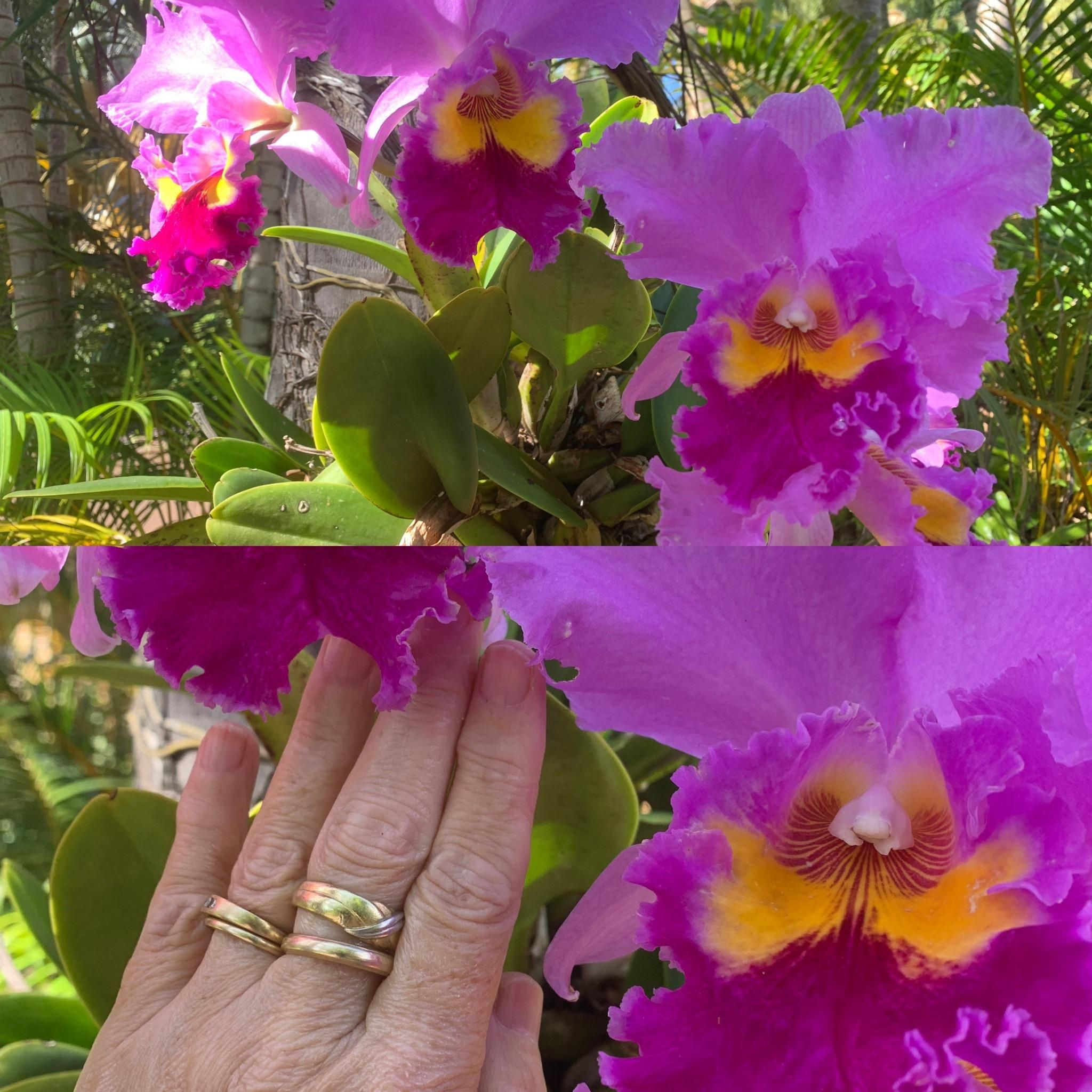 Look at the size of these orchids! Allerton Gardens Kauai