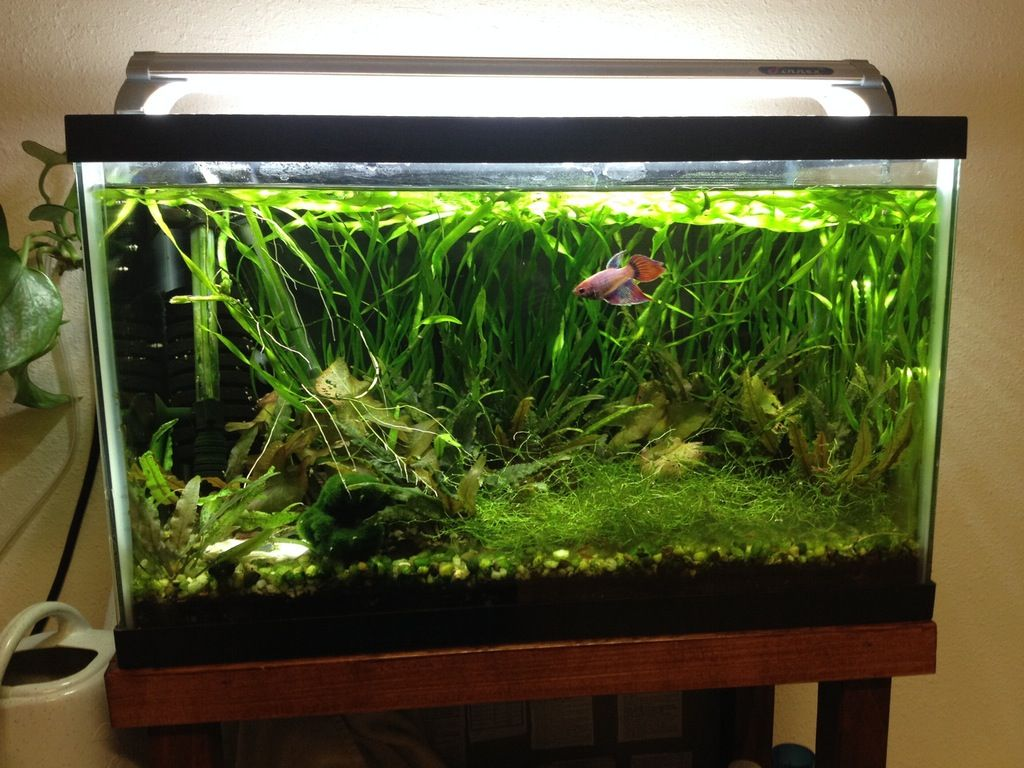 Fts My 10 Gallon Planted Betta Tank R Aquariums 10 Gallon Fish Tank Planted Betta Tank Betta Tank