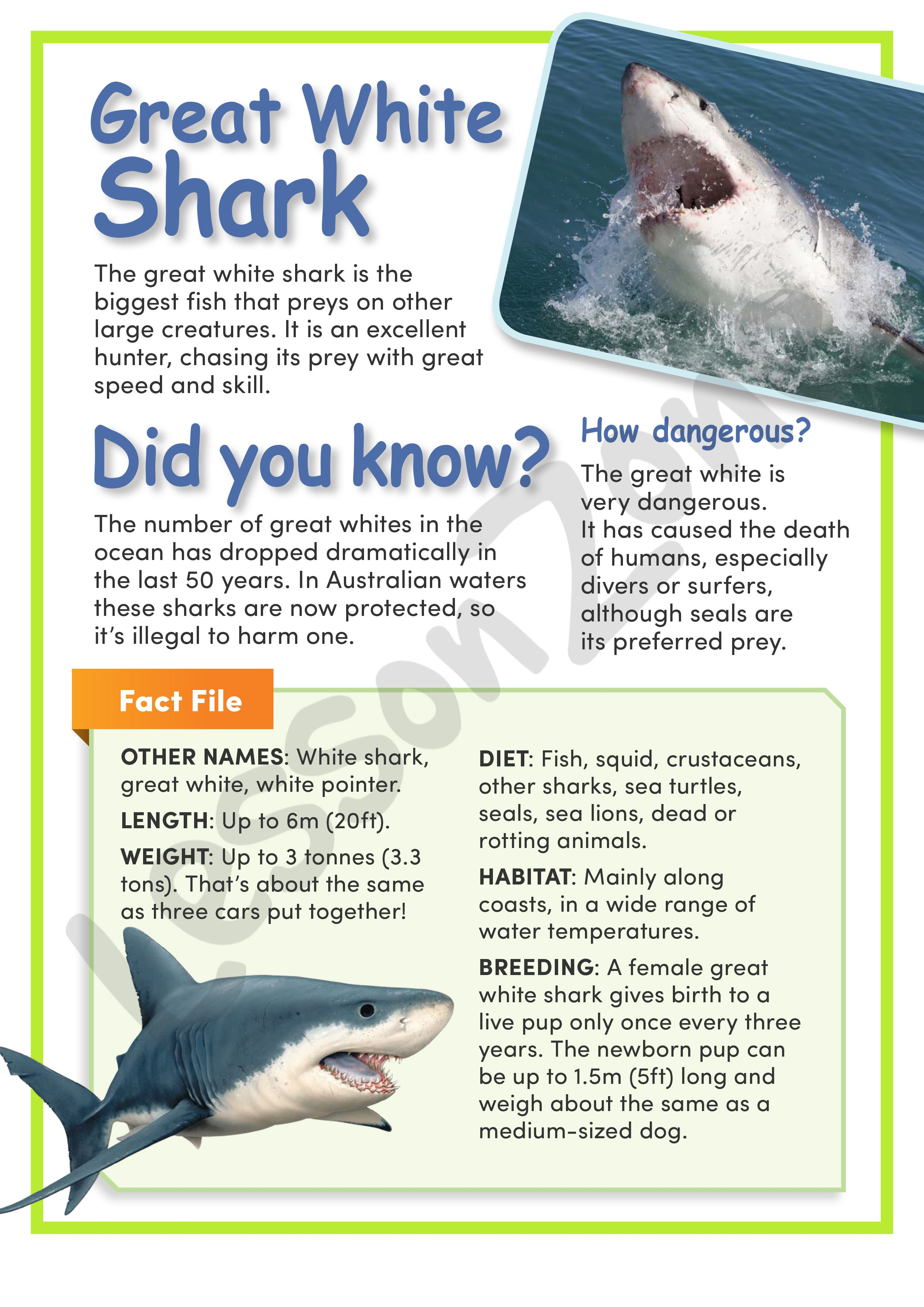 This article, 'Great White Shark' provides information ...