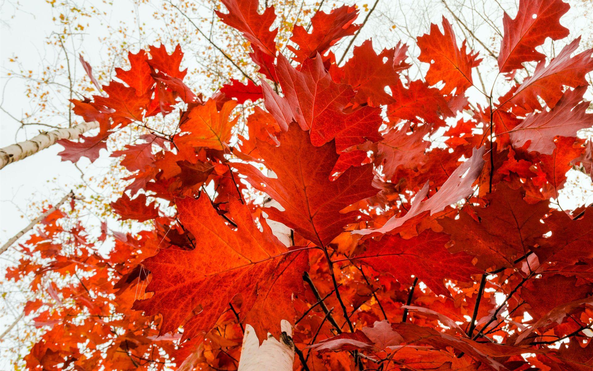 beautiful nature autumn leaves - Google Search