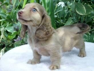 Pin By Amanda Smith On Puppies Animals Beautiful Cute Animals