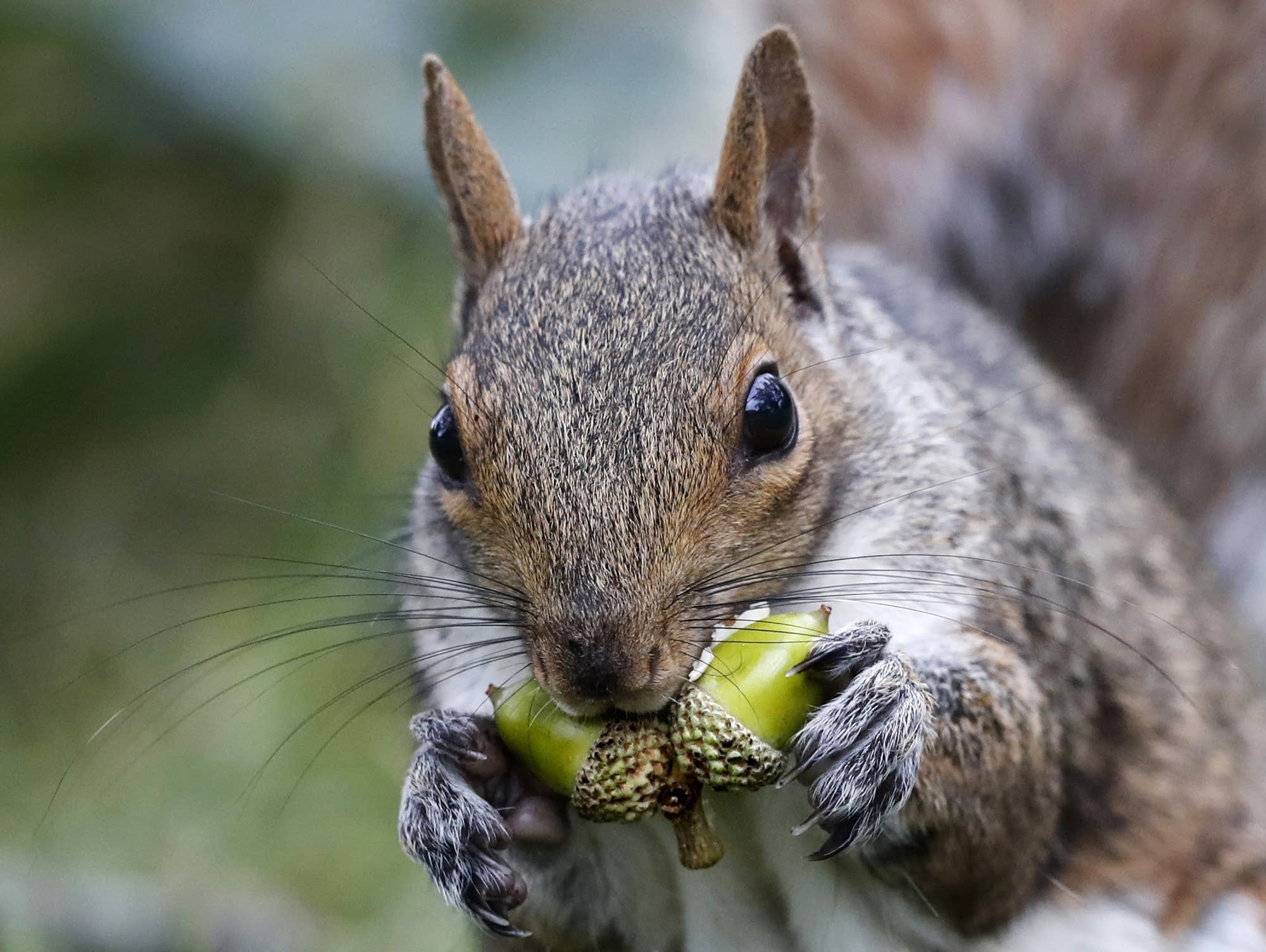 Squirrels Will Chew On Wires Electrical And Security Systems And