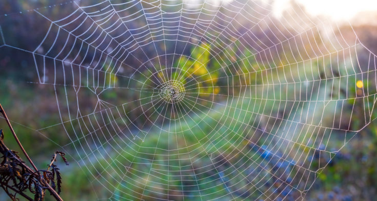 Orb-Weaver Spiders: Spooky Webs But Great For Pest Control - Farmers' Almanac