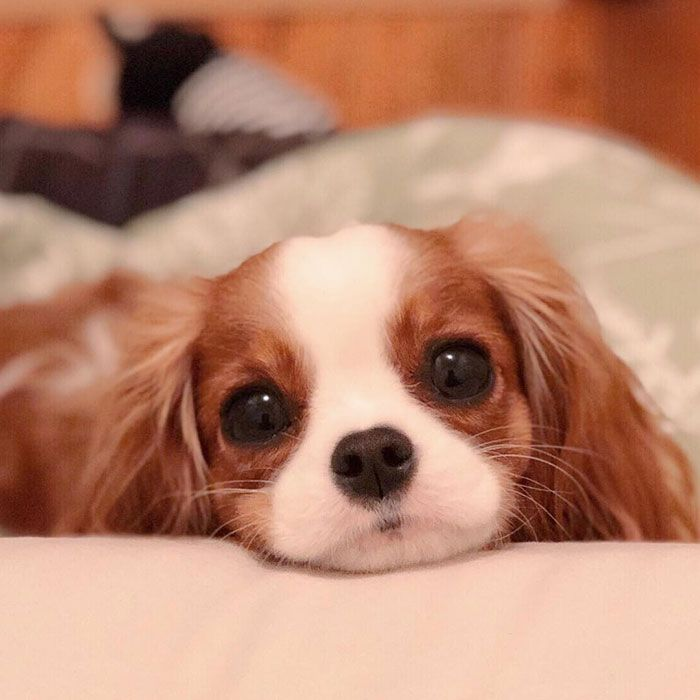 Photo of Nessa The Tiny 2 Year Old Puppy Is Showing Everyone That Being Different Isn't Bad!