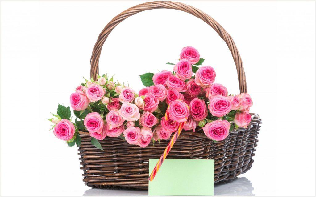 Pink flower basket hd wallpaper pink flower basket hd wallpaper pink flower basket hd wallpaper pink flower basket hd wallpaper 1080p pink flower basket hd wallpaper desktop pink flower basket hd wallpaper hd mightylinksfo