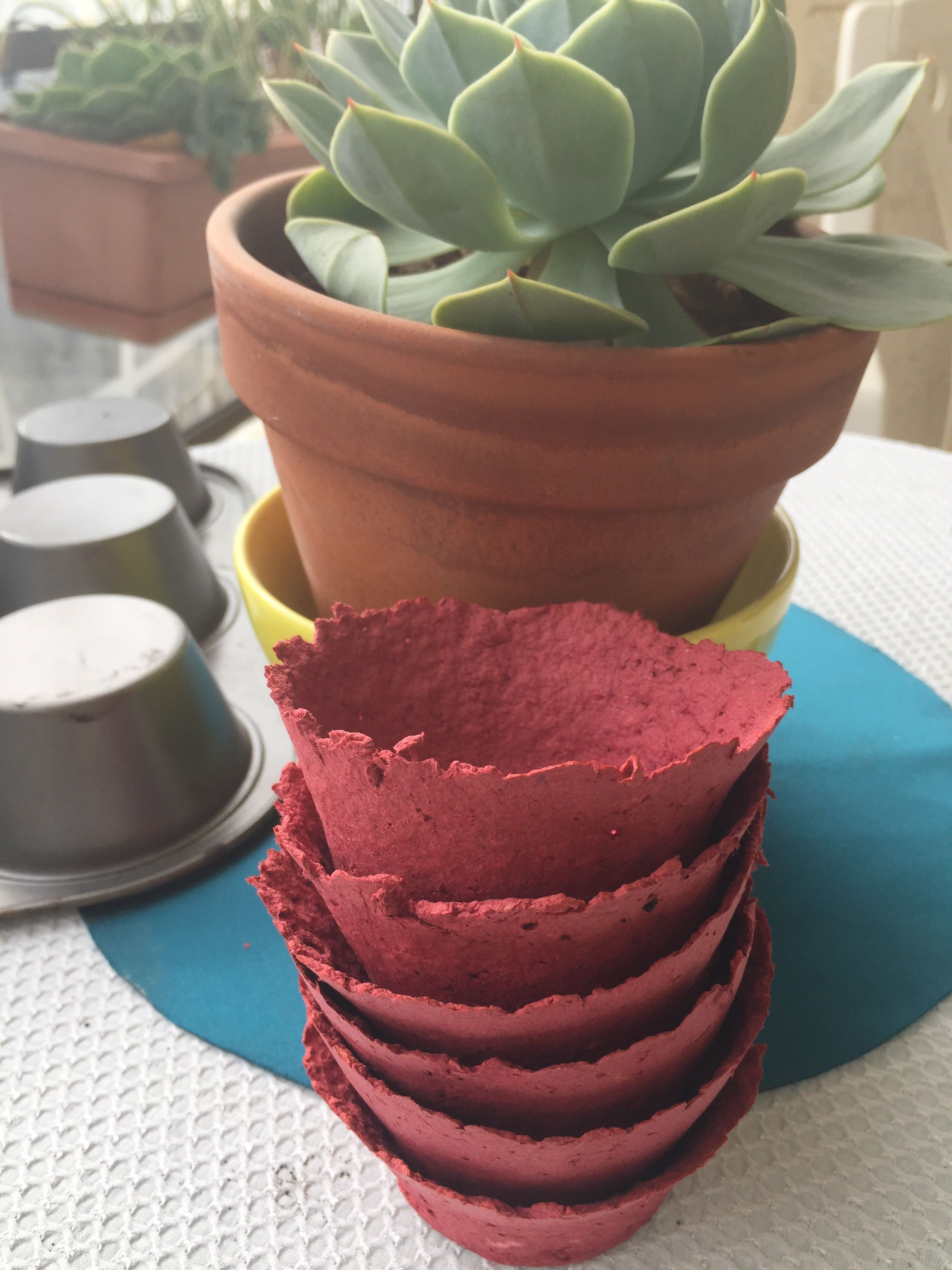 Biodegradable Seed Starter Pots Diy In 5 Minutes 400 x 300