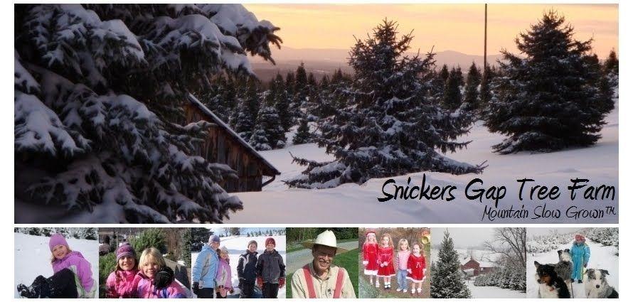 Pin on Snickers Gap Christmas Tree Farm