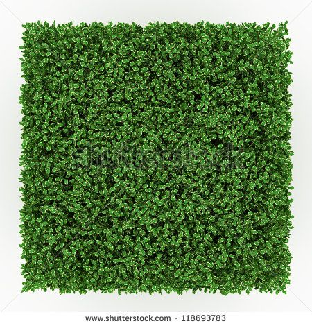 Shrub Top View Google Search Trees Top View Plant