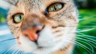 Esto es PetBot la primera cámara de 'selfies' para mascotas