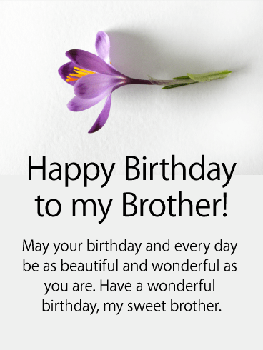Purple Flower Happy Birthday Card for Brother | Birthday & Greeting Cards by Davia | Birthday wishes messages, Brother birthday quotes, Happy birthday quotes for friends