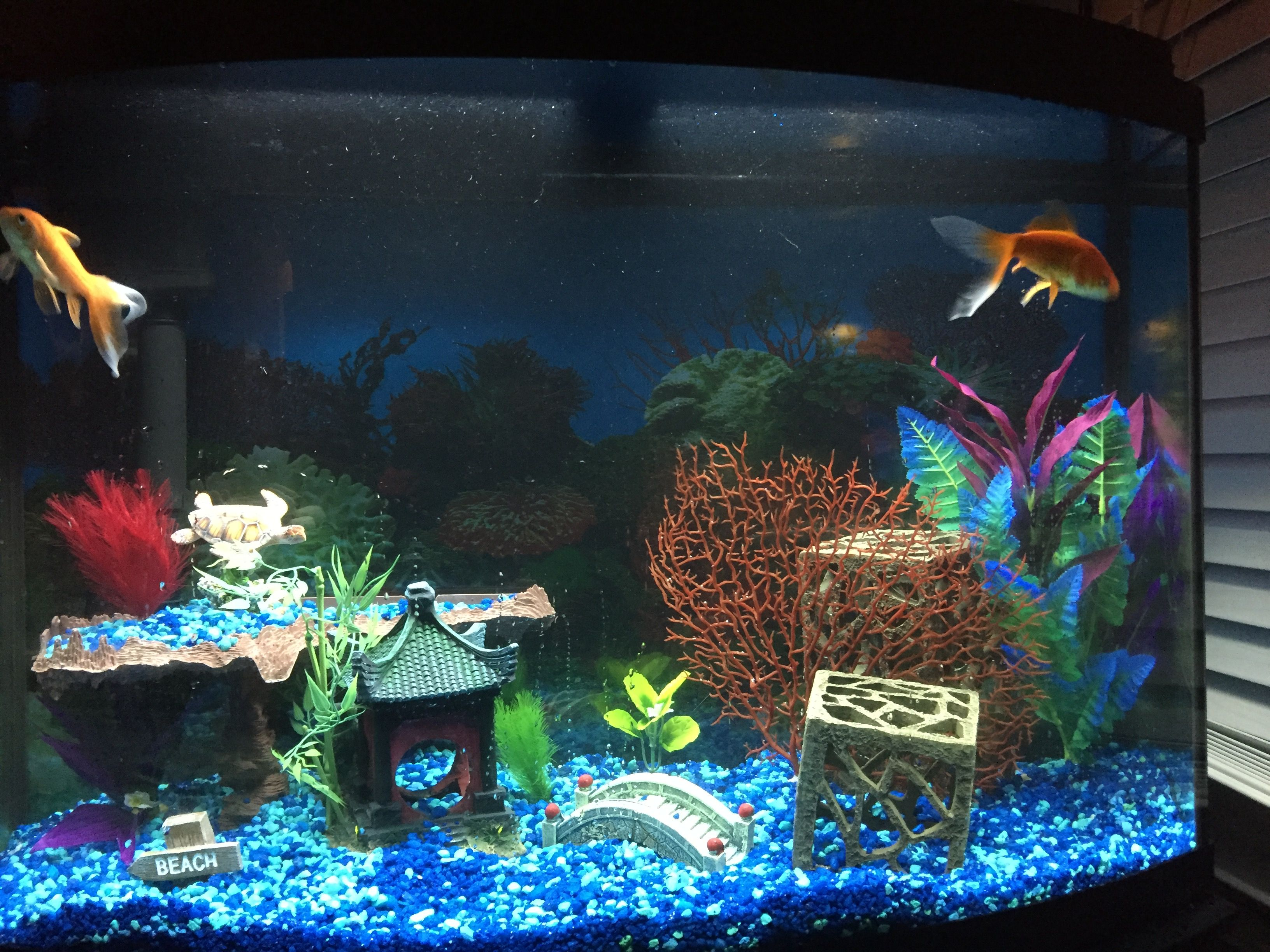 Pretty fish tank idea