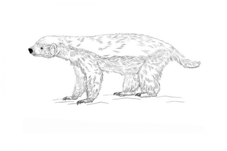 Honey Badger Coloring Page Coloring Pages Animal Coloring Pages