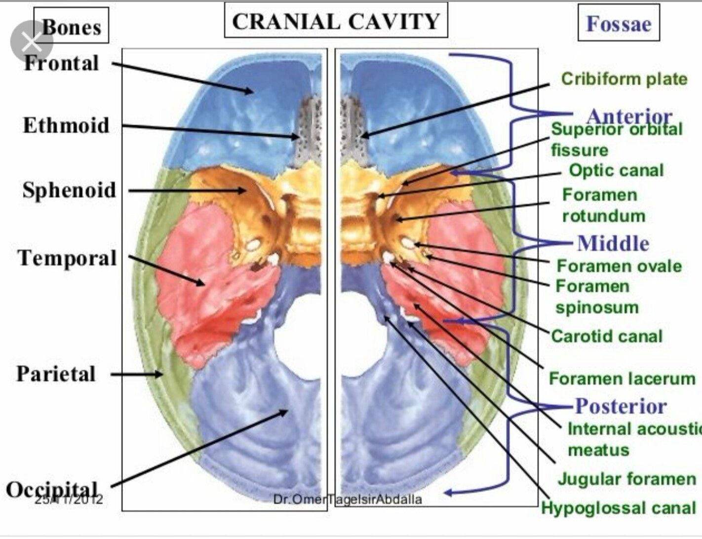 Foramen | Head & Neck Anatomy | Pinterest | Anatomy