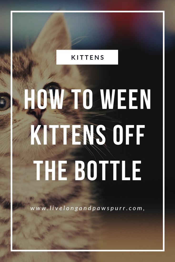 How To Wean Kittens Off Of A Bottle Kitten Care Kittens Newborn Kittens