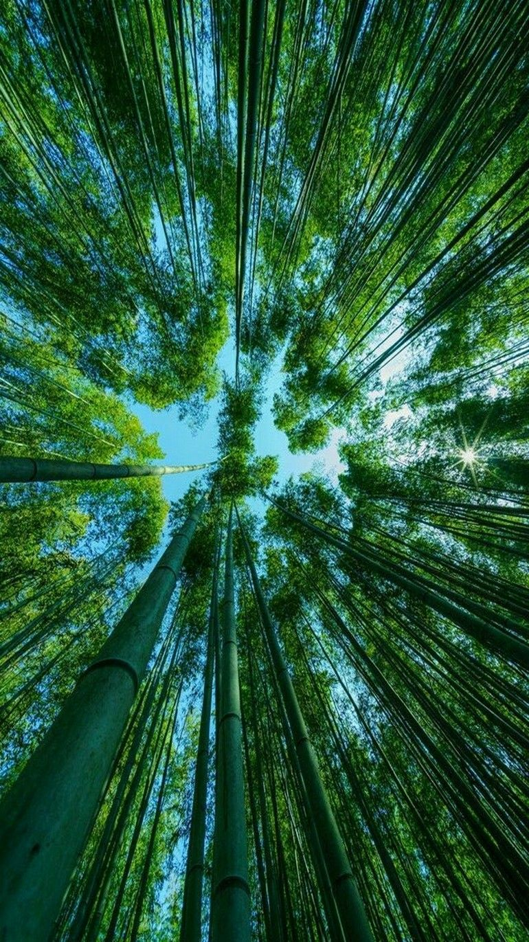 Bamboo Forest Of Kyoto Japan Green Nature Pictures